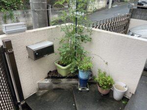 植木が沢山置いてある玄関前